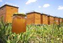 Le mois du miel, c'est parti !